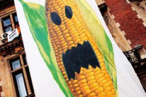 GMO - decydujące starcie