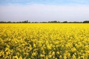 Unijny cel zużycia biopaliw do 2020 r. zostanie zmniejszony?