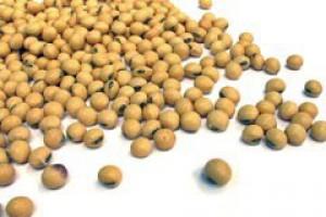 Na polskim rynku jest żywność z GMO