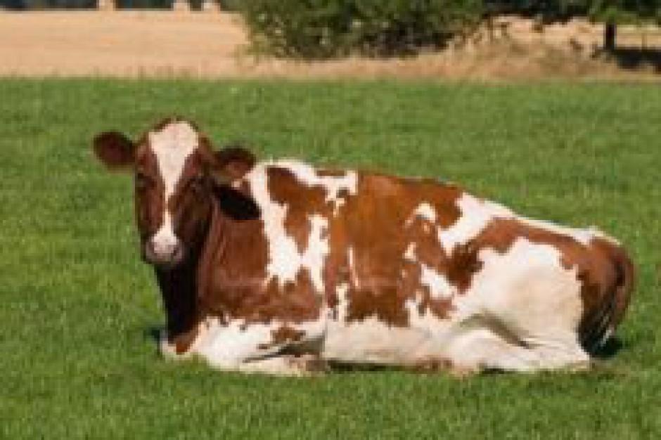 Ukraina: wzrośnie import produktów mlecznych