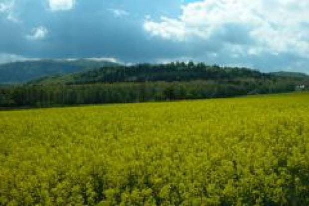 Rzeka biopaliw z Ukrainy