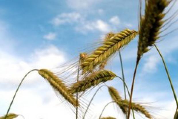 Ukraina: Rosną zapasy zboża