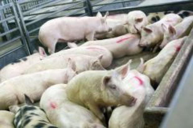 KE chce zrezygnować z dopłat do eksportu wieprzowiny