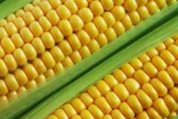 Rozwój produkcji bioetanolu podstawową przyczyną wzrostu cen żywności