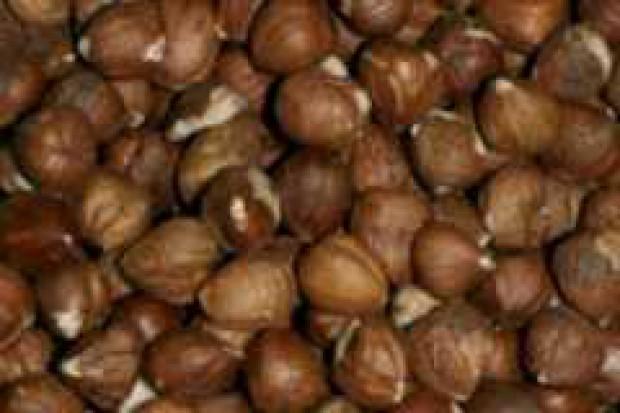 Turcja zwiększa produkcję orzechów laskowych
