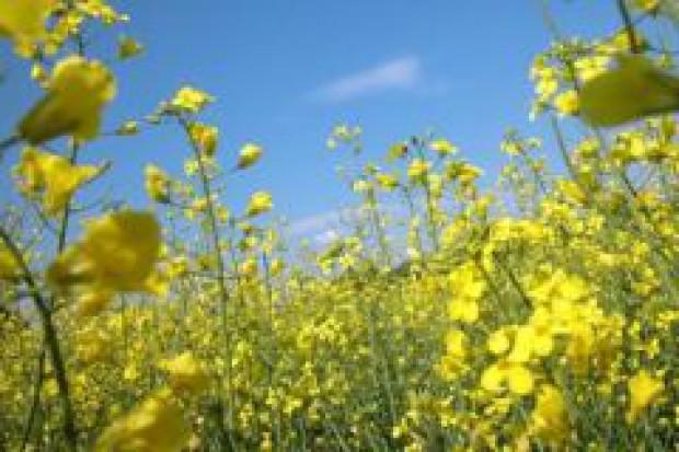 Biopaliwa: są uprawy, brakuje stacji i samochodów