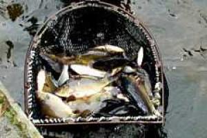 Śląscy rybacy o problemach swojej branży