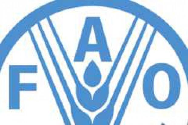 We wtorek w Rzymie rozpoczyna się szczyt FAO