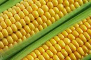 Stany Zjednoczone: burze i powodzie nakręcają ceny kukurydzy
