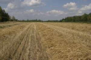 KIG: zakaz GMO wyeliminuje polskich producentów z rynku żywności