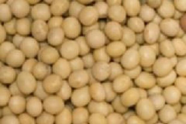 Posłowie zdążą uchylić zakaz stosowania GMO w paszach?