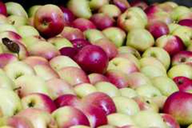 Rosja importuje coraz więcej jabłek i gruszek