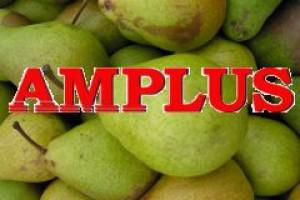 Debiut giełdowy Amplusa w zawieszeniu