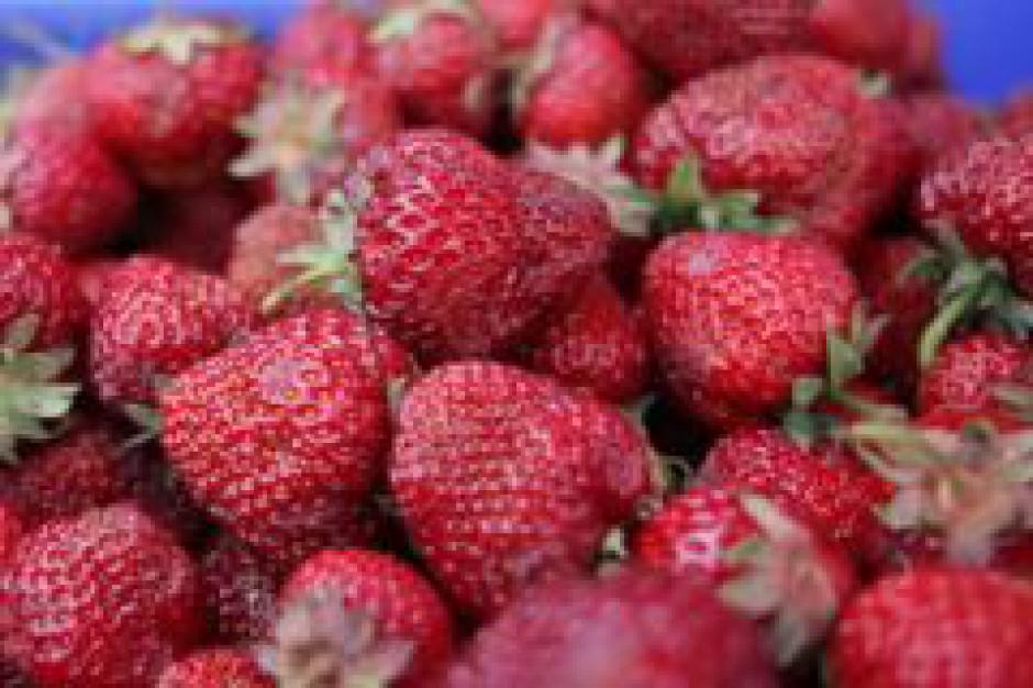 Producenci owoców muszą się śpieszyć z wnioskami o dopłaty