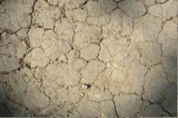 Susza dotyka prawie 70 proc. gmin i 60 proc. gruntów ornych