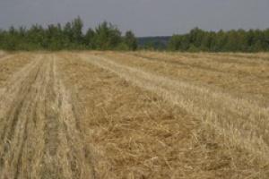 Rolnicy oczekują wysokich cen zbóż