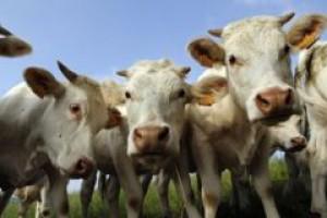 Firmy liczą na zniesienie azjatyckiego embarga na polskie mięso