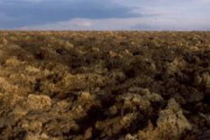 Rolnicy chcą zmian prawnych dotyczących dzierżawy państwowej ziemi