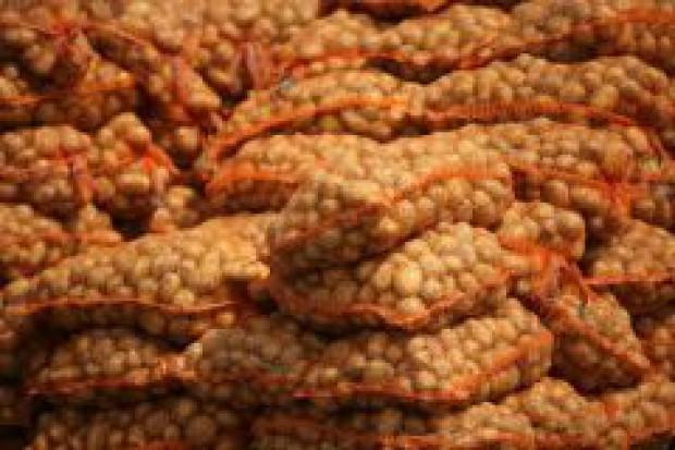 Susza groźna dla ziemniaków i chmielu