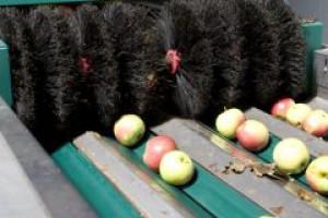 Zakład w Tarczynie zablokowany przez sadowników
