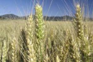 Wbrew śwatowym tendencjom polski przemysł nasienny kurczy się coraz bardziej