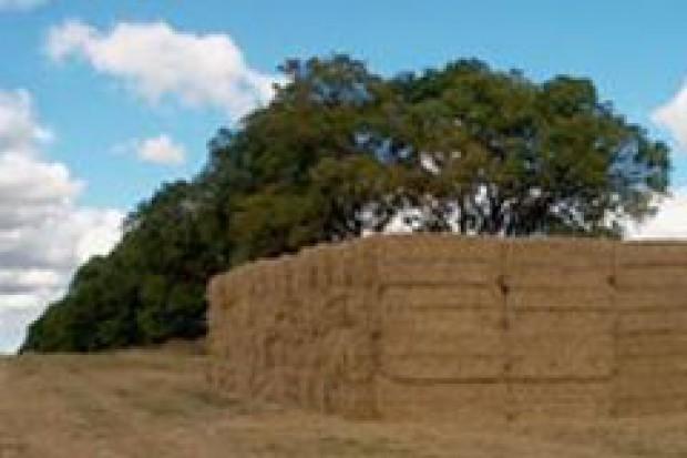 Rolnicy zmonopolizują produkcję biomasy