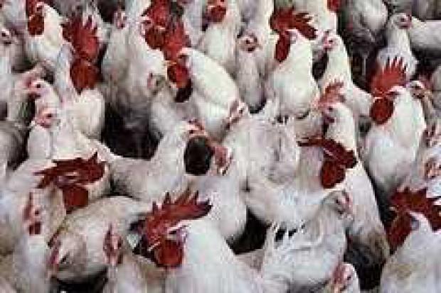 Rekordowa produkcja mięsa drobiowego na świecie