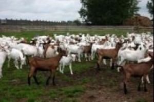 Agro-Damnis inwestuje w zabezpieczenie dostaw surowca