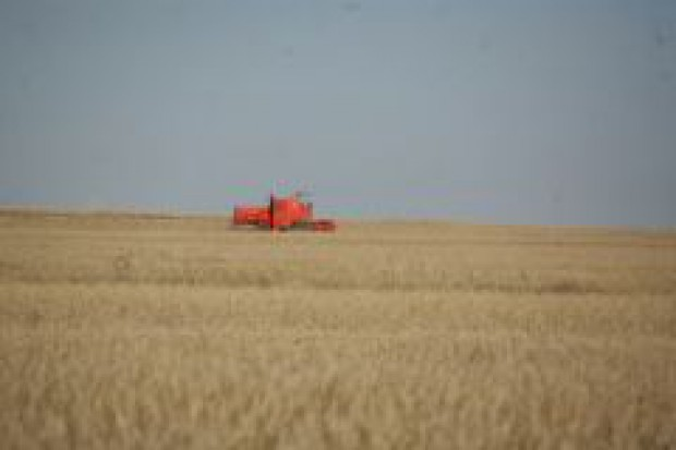 Niskie ceny zbóż obniżą jakość produkcji w następnych latach