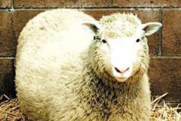 Europejczycy nie chcą żywności z klonowanych zwierząt