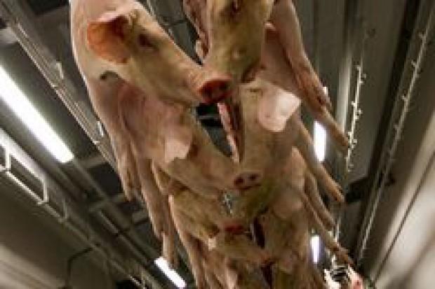 IERiGŻ: spadnie produkcja mięsa