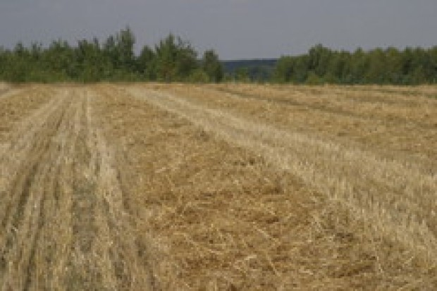 Cła i skup nie pomogą na spadające ceny zbóż