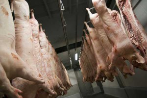Polska trzecim importerem niemieckiej wieprzowiny