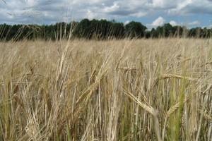 Rosja zniosła zakaz importu polskich produktów pochodzenia roślinnego