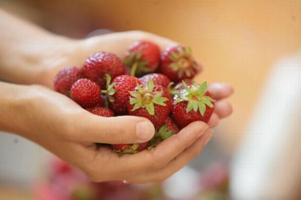 PE: 500 mln euro na bezpłatną dystrybucję warzyw i owoców w szkołach