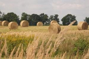 Na unijnych giełdach towarowych słabną notowania zbóż