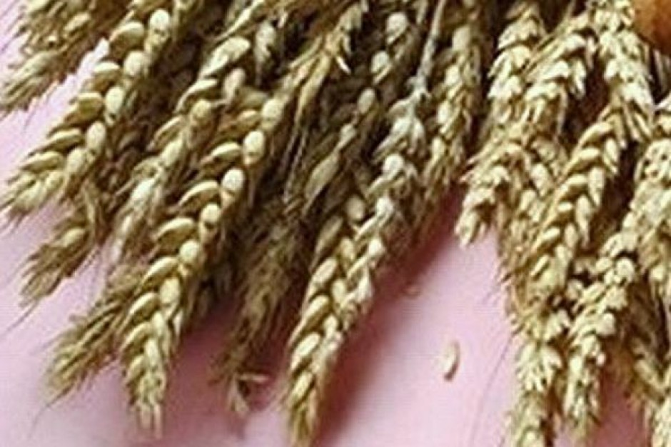 Resort rolnictwa: Spadki cen zbóż wyhamowane