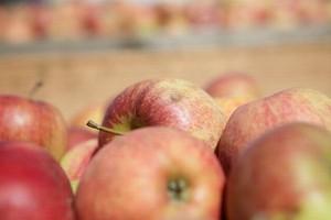 Mniej jabłek w unijnych magazynach