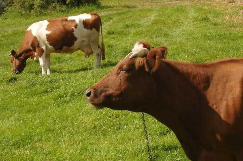 Steki wołowe w Niemczech droższe niż przed rokiem