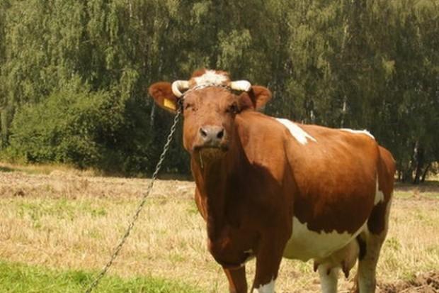Zwiększyła się wartość obrotów polskiego handlu żywcem, mięsem i przetworami mięsnymi