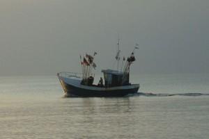 Wylosowano jednostki rybackie, które mogą w 2009 r. łowić dorsza