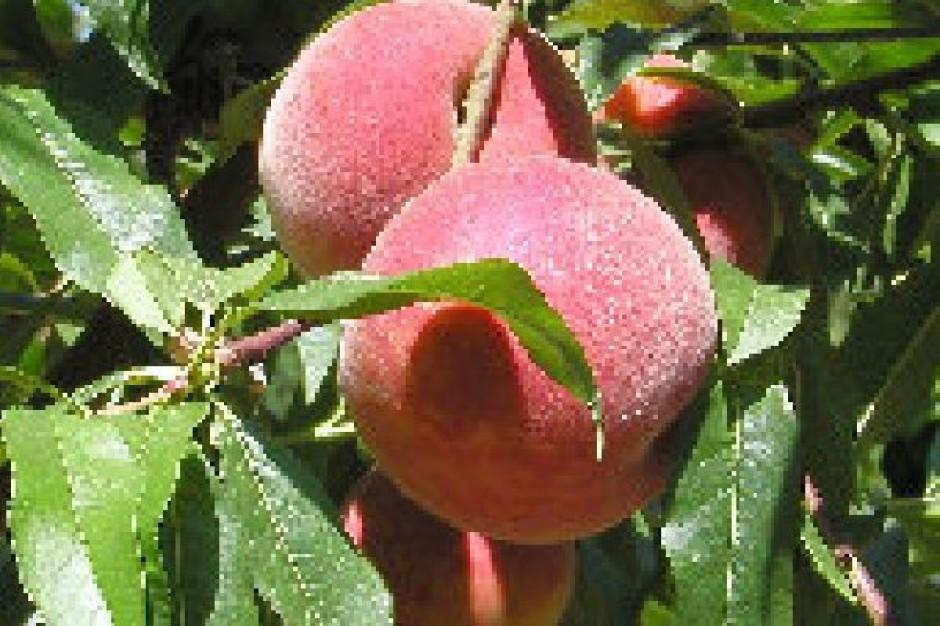 Włoski dystrybutor wejdzie na polski rynek owoców świeżych