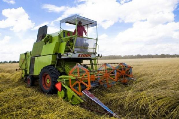 IZP/KFPŻ: Mało transakcji na rynku zbóż, ceny stabilne