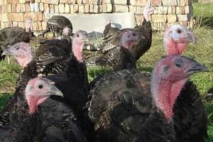 Nowe przypadki ptasiej grypy w Niemczech