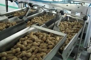 W nowej fabryce Helio będzie produkować 400 ton bakalii miesięcznie