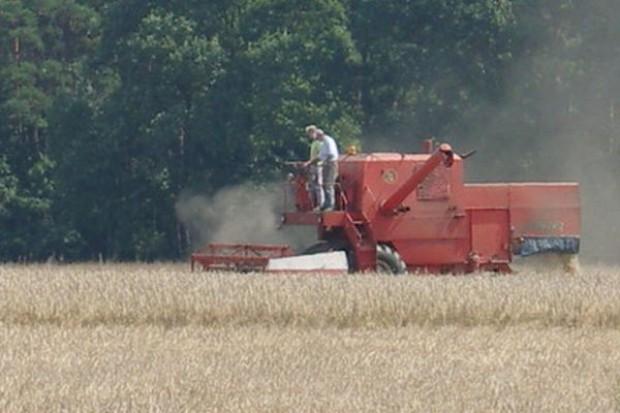 Koniec hossy na unijnym rynku zbóż?