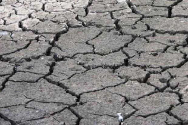 Susza w Argentynie obniży o ponad 40 proc. zbiory pszenicy