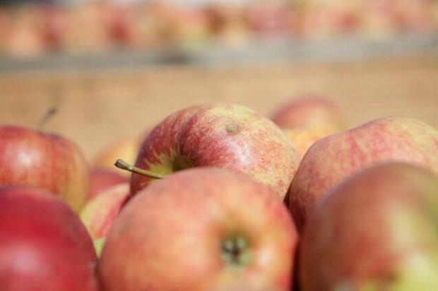 Niewielki wzrost cen jabłek