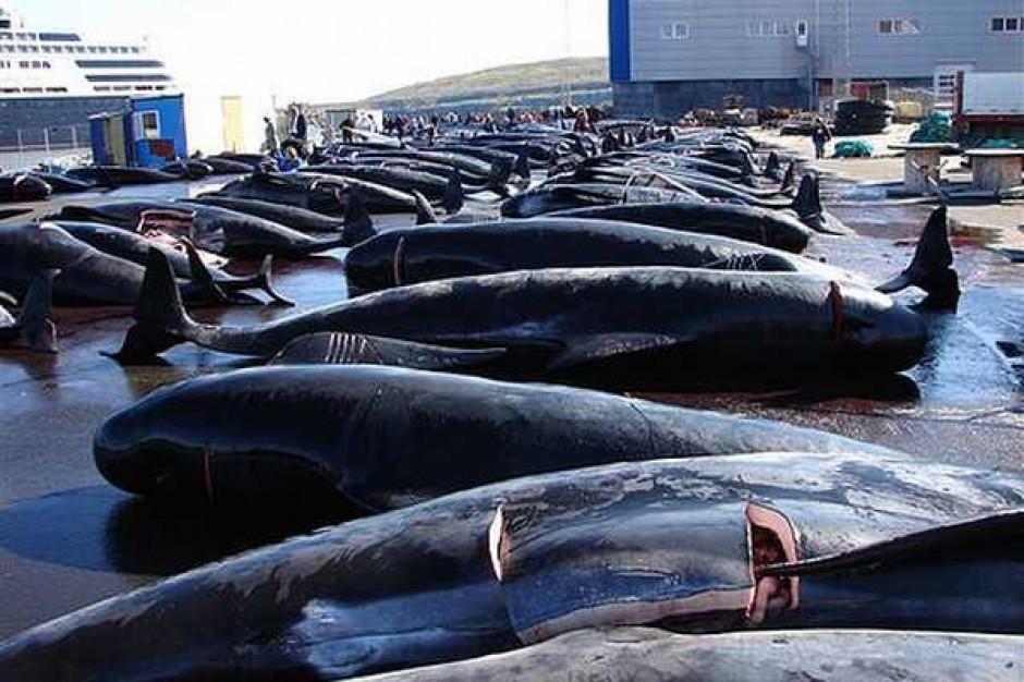 Ekolodzy przeciwko połowom wielorybów