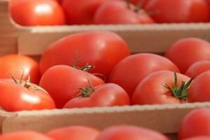 Unijni producenci pomidorów chcą reformy rynku